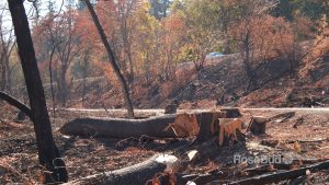 OO Bear Creek Greenway Restoration