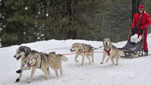 Diamond Lake Dog Mushers